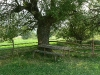 Дърво край Добърско