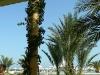Hammamet_0022.jpg