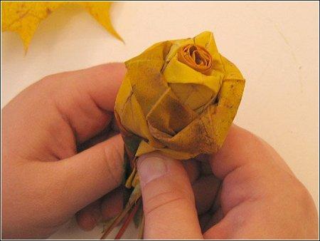 роза10