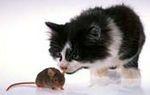 Храна за котки