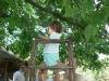 На стълбата